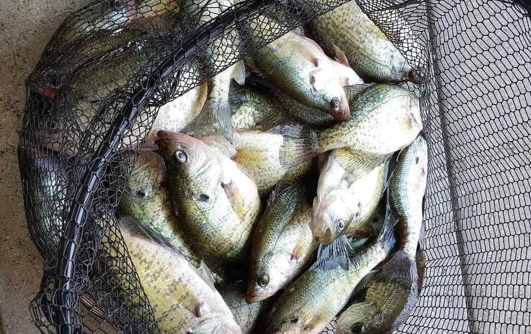 Summertime Crappie Lake of the Ozarks